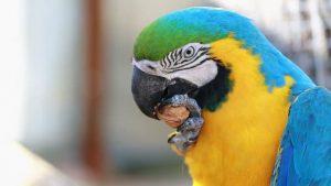 Macaw v1.5.15 Crack